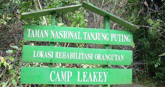 CampLeakey_Snapseed-1024x768