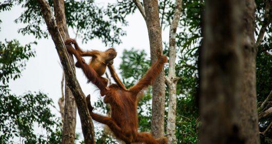 BPI_Wow Borneo_Kumai_Bjorn Vaughn_Feb 2020-0387