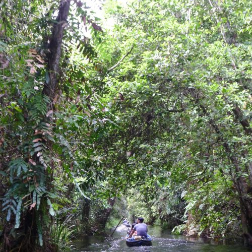 Canoe access to Sebangau