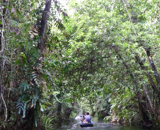 Canoe access to Sebangau